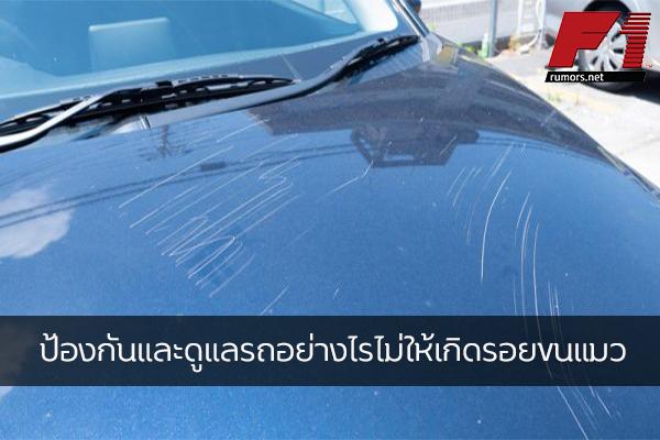 ป้องกันและดูแลรถอย่างไรไม่ให้เกิดรอยขนแมว F1rumors Car Bigbike Motorsport วิธีดูแลรถไม่ให้เกิดรอยขนแมว